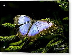 Bright Blue  Acrylic Print by Leslie Leda