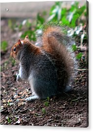 Bright Eyed And Bushy Tailed Acrylic Print