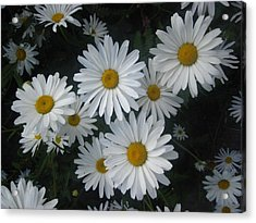 Acrylic Print featuring the photograph Bright Eyed Daisys by Cheryl Perin