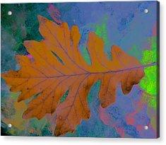 Bright Oak Acrylic Print by Beth Akerman