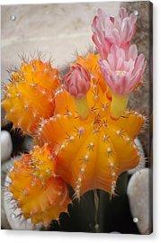 Bright Orange Cactus Acrylic Print by Emma Manners