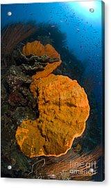 Bright Orange Sponge With Sunburst Acrylic Print by Steve Jones