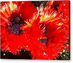 Bright Red Acrylic Print by Ken Riddle