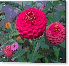 Bright Red Zinnia Flower Acrylic Print by Padre Art