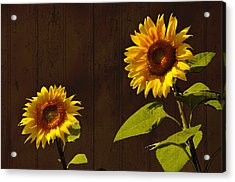 Acrylic Print featuring the photograph Bright Sunflower Pair by Nancy De Flon