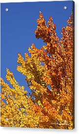 Brilliant Fall Color And Deep Blue Sky Acrylic Print by Mick Anderson