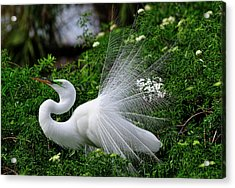 Brilliant Feathers Acrylic Print