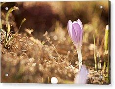 Brilliant Flowers Acrylic Print by Odon Czintos
