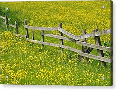 Broken Fence And Buttercup Field Acrylic Print by Photos by R A Kearton