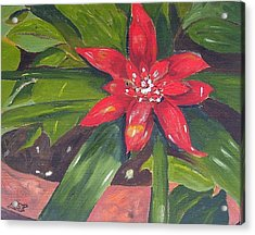 Bromeliad Bloom Acrylic Print by Maria Soto Robbins