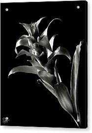 Acrylic Print featuring the photograph Bromeliad In Black And White by Endre Balogh