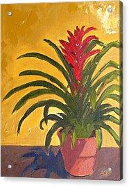 Bromeliad  Acrylic Print by Maria Soto Robbins
