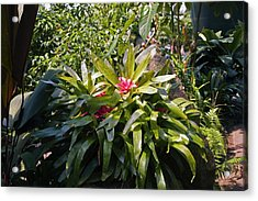Bromeliad Plant Acrylic Print by Dr Keith Wheeler