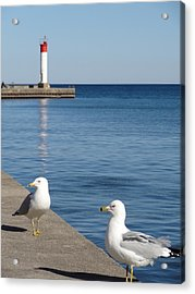 Acrylic Print featuring the photograph Bronte Lighthouse Gulls by Laurel Best