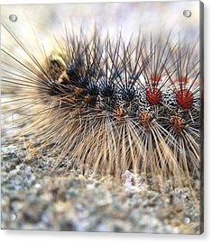 Brooklyn Caterpillar Acrylic Print