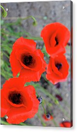 Brothers Of Red Acrylic Print by Jerry Cordeiro