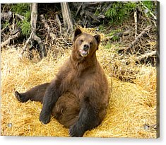 Brown Bear Acrylic Print by Derek Swift