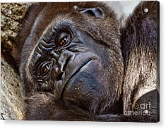 Brown Eyes Acrylic Print by Jill Smith