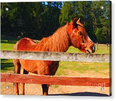 Brown Horse Behind Fence . Painterly Acrylic Print by Wingsdomain Art and Photography