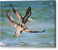 Brown Pelicans Taking Flight Acrylic Print by Roena King