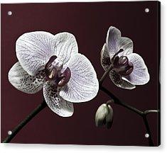Brown Purple White Orchids Flower Macro - Flower Photograph Acrylic Print