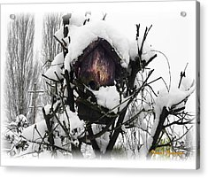 Acrylic Print featuring the photograph Brrr-rr-die by Sadie Reneau