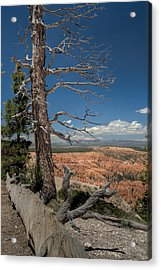 Bryce Canyon - Dead Tree Acrylic Print by Larry Carr