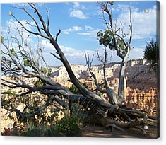 Acrylic Print featuring the photograph Bryce Canyon by Dany Lison