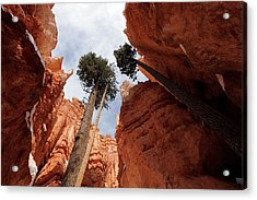 Acrylic Print featuring the photograph Bryce Canyon Towering Hoodoos by Karen Lee Ensley