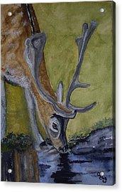 Buck At Bushy Park Acrylic Print by Carole Robins