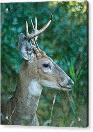 Buck Profile 9634 Acrylic Print by Michael Peychich