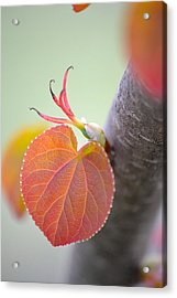 Acrylic Print featuring the photograph Budding Heart by JD Grimes