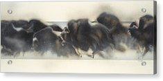 Buffalo In Winter Acrylic Print by Douglas Fincham