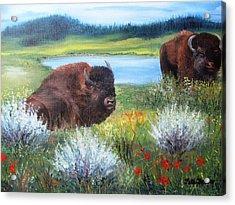 Buffalo Repose  Acrylic Print