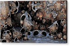 Bug Art Acrylic Print