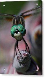 Bug Eater Acrylic Print