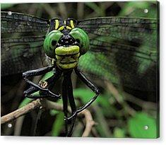 Acrylic Print featuring the photograph Bug-eyed by Doug McPherson
