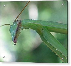 Acrylic Print featuring the photograph Bug Eyes by Chad and Stacey Hall