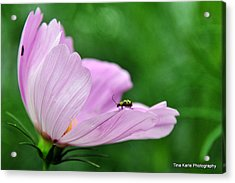 Bug On Flower Tip Acrylic Print by Tina Karle