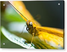 Acrylic Print featuring the photograph Bug Out by Leslie Leda
