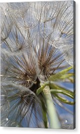 Bug's Eye View Acrylic Print