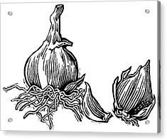 Bulbs Of Garlic, Woodcut Acrylic Print by Gary Hincks