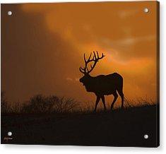 Bull Elk Frozen Sunset Acrylic Print
