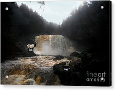 Acrylic Print featuring the photograph Bull Elk In Front Of Waterfall by Dan Friend