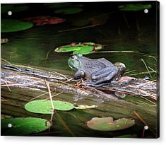 Acrylic Print featuring the mixed media Bull Frog by Bruce Ritchie
