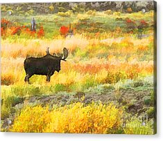 Bull Moose Acrylic Print by Clare VanderVeen