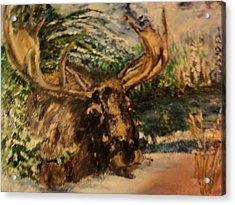 Bull Moose Acrylic Print by Lynn Welker