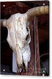 Bull Skull Acrylic Print