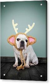 Bulldog Con Disfraz De Reno Acrylic Print by Retales Botijero