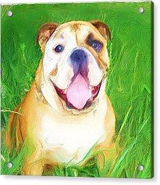 Bulldog Acrylic Print by Ritmo Boxer Designs